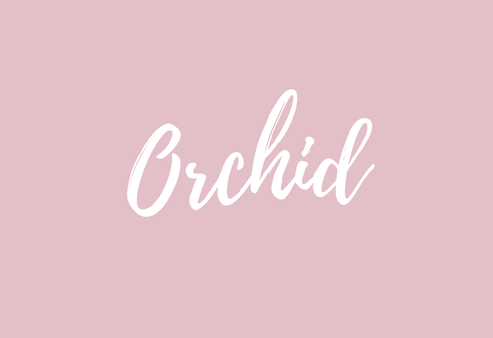Orchid name meaning