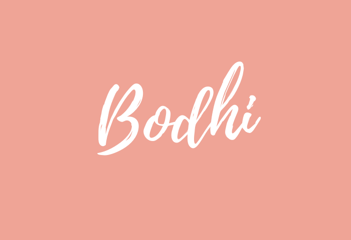 bodhi name meaning